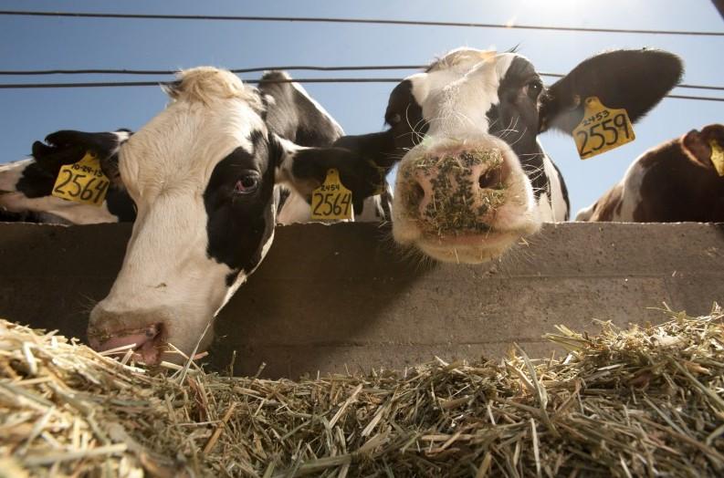 Лет, картинки сельское хозяйство животноводство