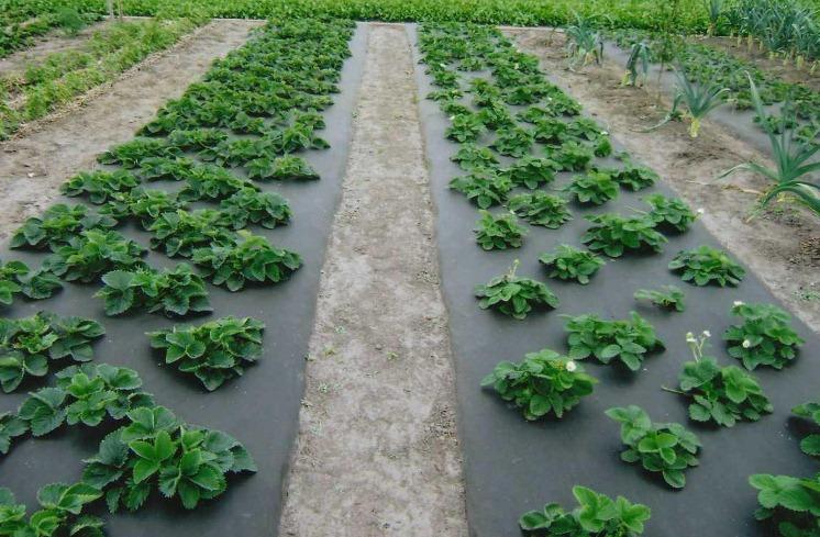 Назначение агроволокна и его использование
